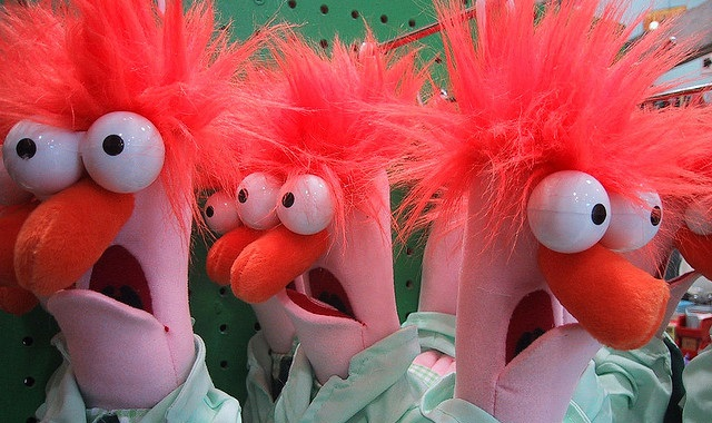Confused muppets